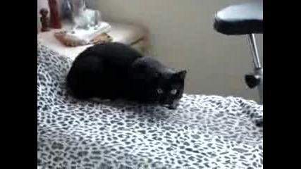 Гладна котка мяука