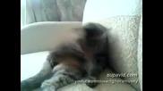 Котката Тайсън Се Бие Сама Със Себе Си многоо смях :д