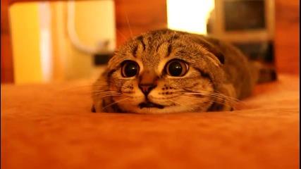 Котето с най-проницателния поглед:)