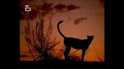 Гепардите, смъртоносната надпревара.бг аудио