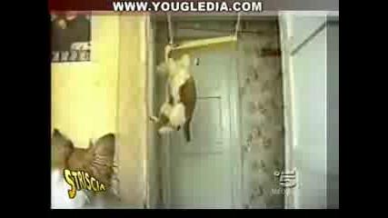 Най - смешните котки