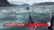 Стадо китове изненада съпрузи за юбилея им News7