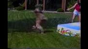 Смях! Вижте това супер енергично куче