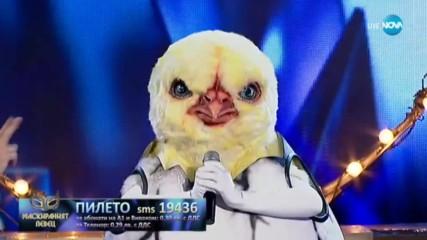 Пилето изпълнява