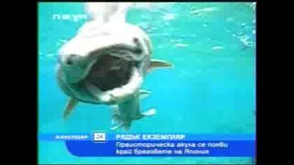 Интересна Акула Излезнала От Дълбините