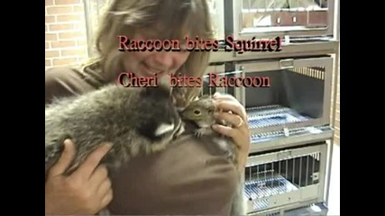 Woman-bites-raccoon-(after-racco