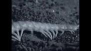 Огромна Стоножка Изяжда Прилеп