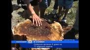 17 г. момче взриви дърво в училище