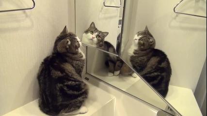 Сладко коте се гледа в огледалото :)