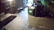 Смях! Мечка краде контейнери за смет