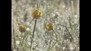 Сфера на злато - Валтер Dionisie