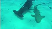 Поставяне на камера върху перката на акула чук