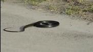 Какво става ,когато дадем наркотици на змия!
