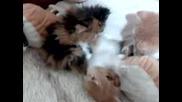 котета 3
