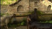 Родопски села