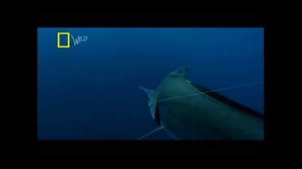 National Geographic - Чудовищна Риба