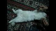 котка спи много сладко