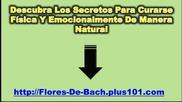 Terapia De Flores De Bach