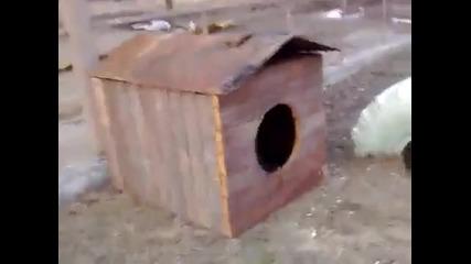 Най-страшното куче в света (смях до дупка)