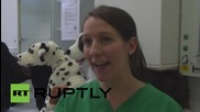 Germany: Future vets practice on fluffy animals in Hannover