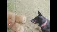 Ultimate Dog Attack On Bear (Fight Til Death)