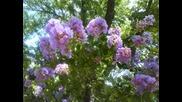 Едемската градина, пророците, апостолите и Исус Христос ( Юлия Борисова)