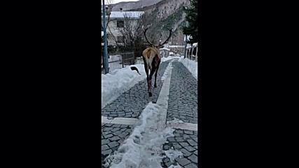 When deer met cat! See how unexpected encounter in Villetta Barrea unfolds