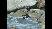 Енциклопедия на животните - Пингвин