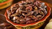 Топ 5 най-вкусни насекоми