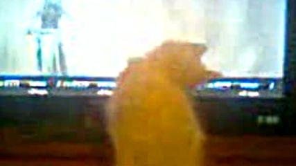 Kote gleda motocros (smqh)
