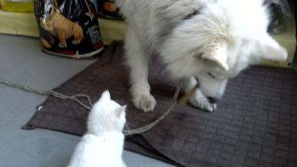 Рони се опитва да се добере до вкуснотията на Макс,та даже и да му я отмъкне!