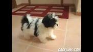 Луд Смях С Куче!!!