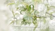 Schubert - Stndchen -