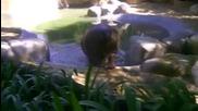 Интереснa Случка в Зоопарка ! Пълен Смях