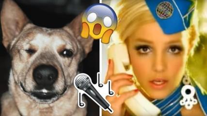 Куче запя песен на Бритни без да иска, стана сензация