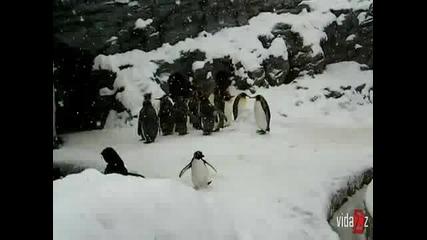Пингвин атлет///