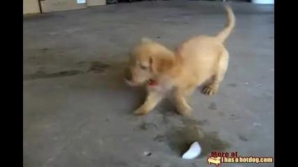 Сладко кученце си играе с кубче лед