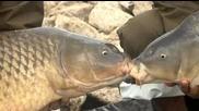 Ribolov na Ezeroto za trofeinite sharani 07