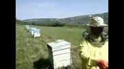 Как се вади екологично чист и натурален мед мед