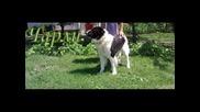 Овчарски Кучета - Породи