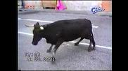 Сблъсък между 2 бика