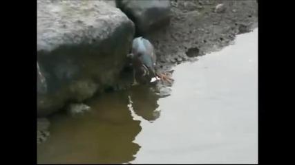 Хитра птица лови риба с примамлива стръв!