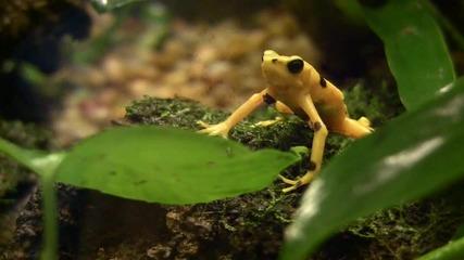 Животните на земята (hd) 1080p