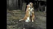 Истинска дружба