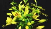♫☀златно жълто! ... ( Nikos Ignatiadis music) ...❀