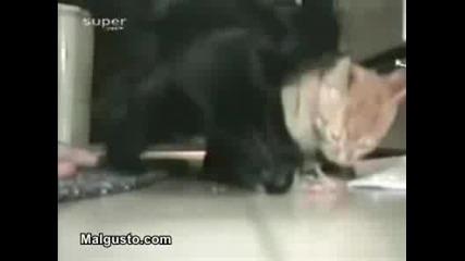 Котка Егоист