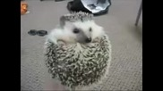 Boggie Boggie Hedgehog