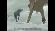 Бате Пешо и Тина - Wolf