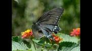 Пеперудата-изящество и красота