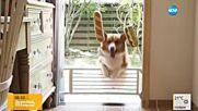 Колко упорито може да бъде едно куче?